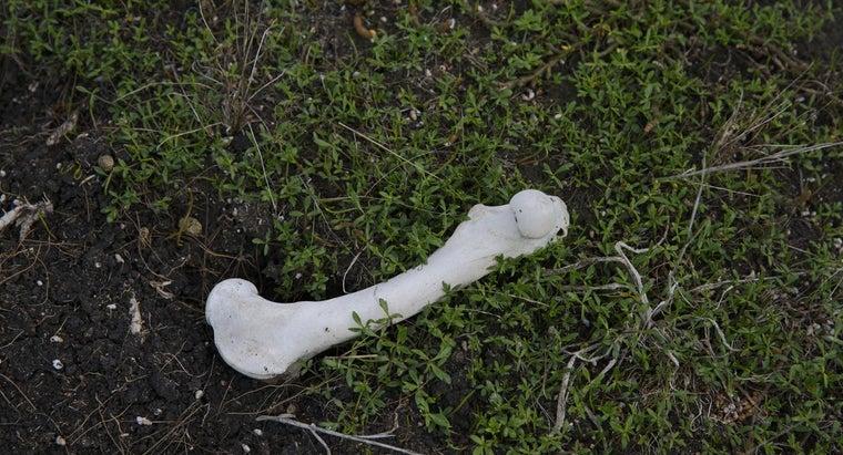 much-bones-weigh