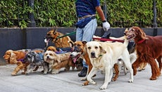 How Much Does It Cost If You Leave Your Dog at Doggy Daycare?