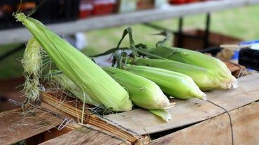 How Much Does an Ear of Corn Weigh?