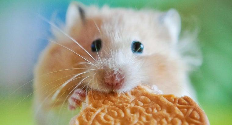 much-hamster-weigh