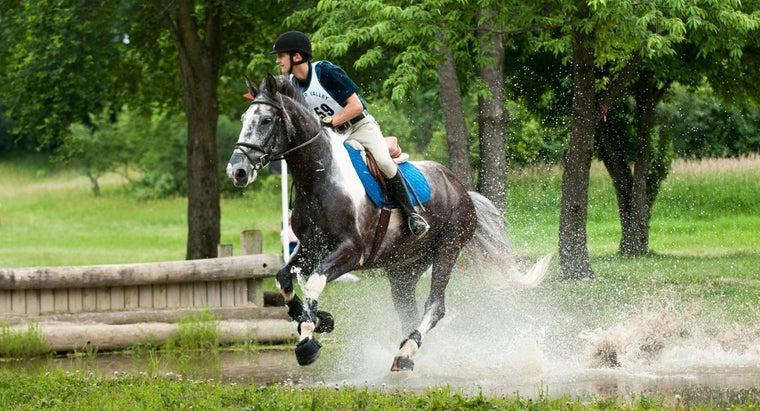 much-horse-weigh
