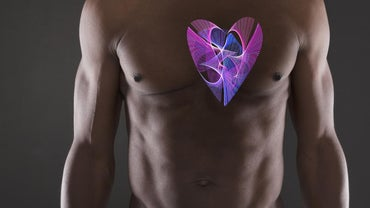 How Much Does the Human Heart Weigh?