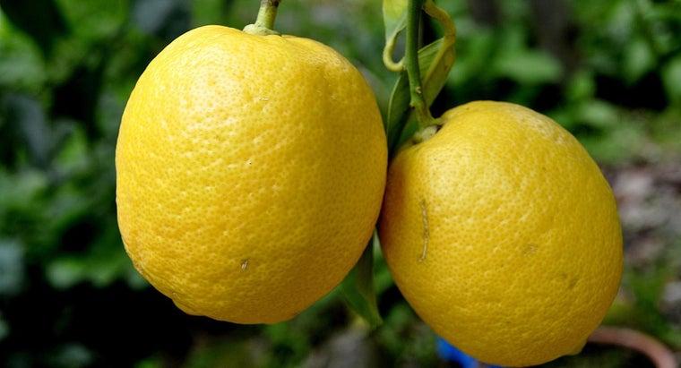 much-lemon-weigh