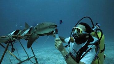 How Much Money Do Marine Biologists Make?
