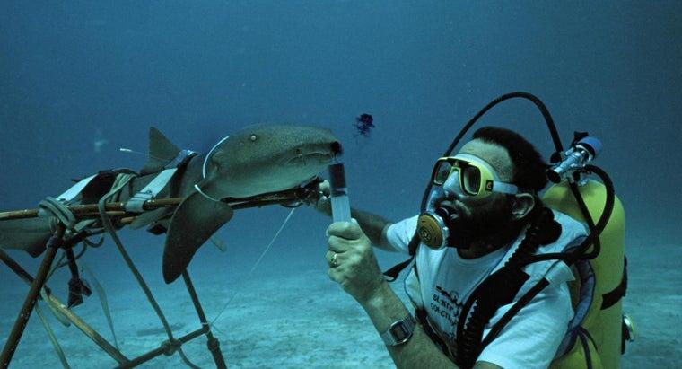 much-money-marine-biologists-make