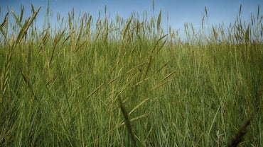 How Much Oxygen Does Grass Produce?