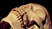 How Much Force Does It Take to Break a Human Bone
