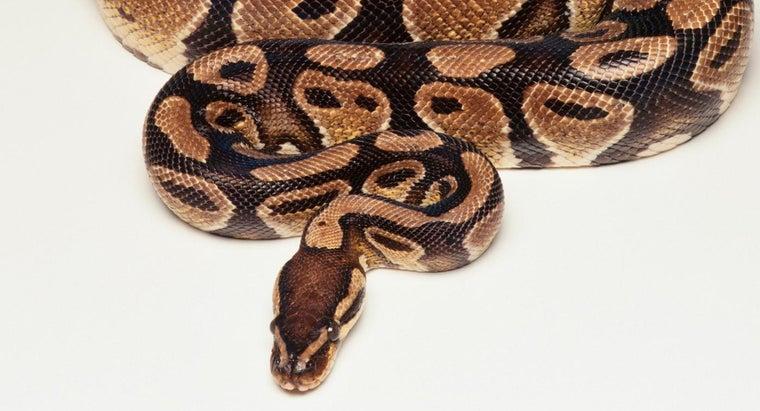 much-python-weigh