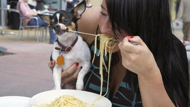 How Much Should a Chihuahua Eat a Day?