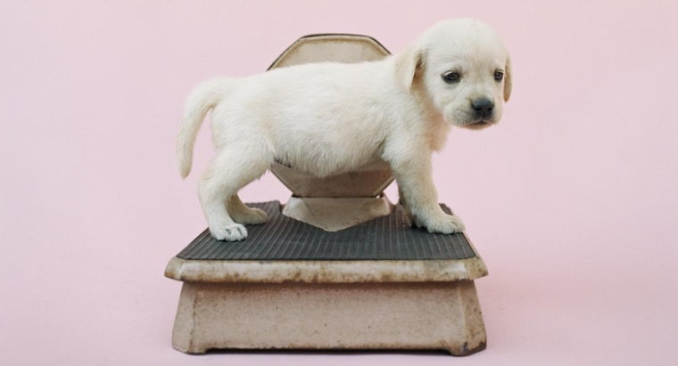 much-should-puppy-weigh