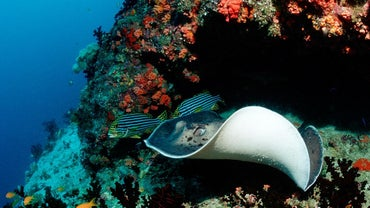 How Much Do Stingrays Weigh?