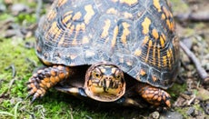 How Much Does a Turtle Weigh?