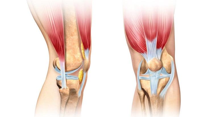 muscle-bends-knee