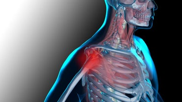 How Do Muscles and Bones Work Together?