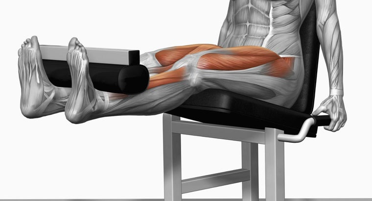 muscles-used-leg-extensions