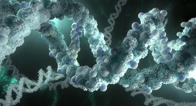 must-dna-able-make-copies-itself