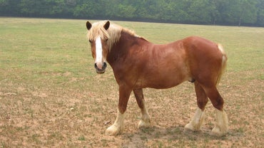 What Is the Name for a Male Horse?