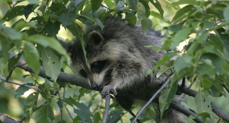 names-animals-omnivores
