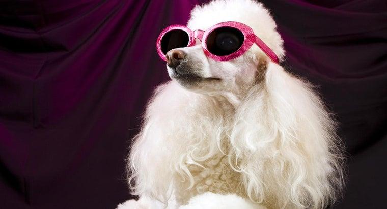 names-female-poodles