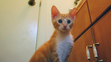What Are Some Names for Orange Kittens?