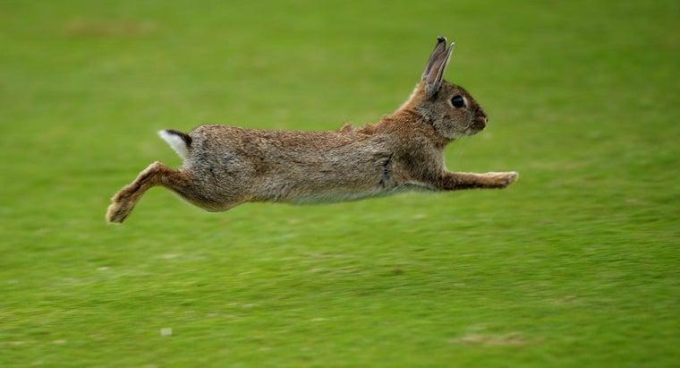 napoleon-attacked-horde-rabbits