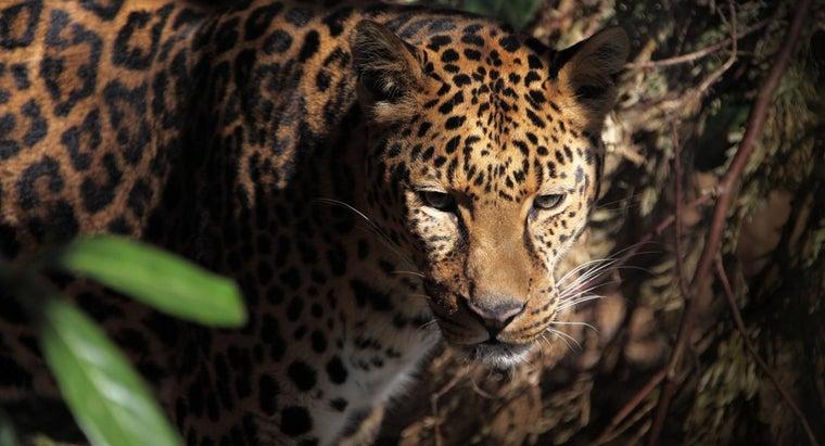 national-animal-brazil