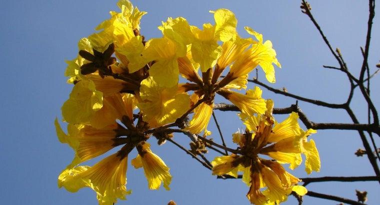 national-flower-brazil