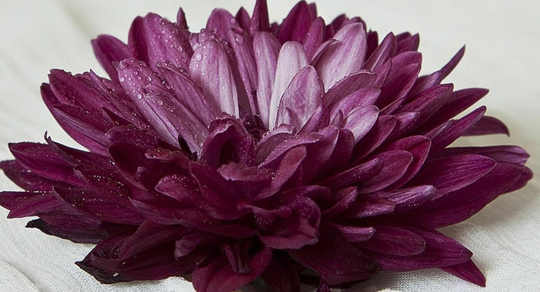 national-flower-japan