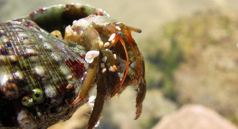 natural-habitat-hermit-crabs-wild
