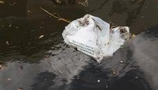 What Are Natural Plastics?