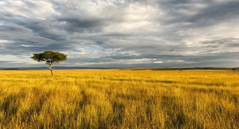 natural-resources-african-savanna