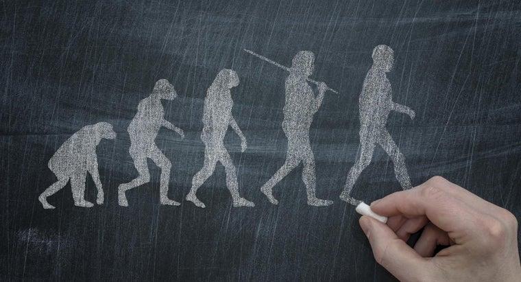 natural-selection-lead-evolution
