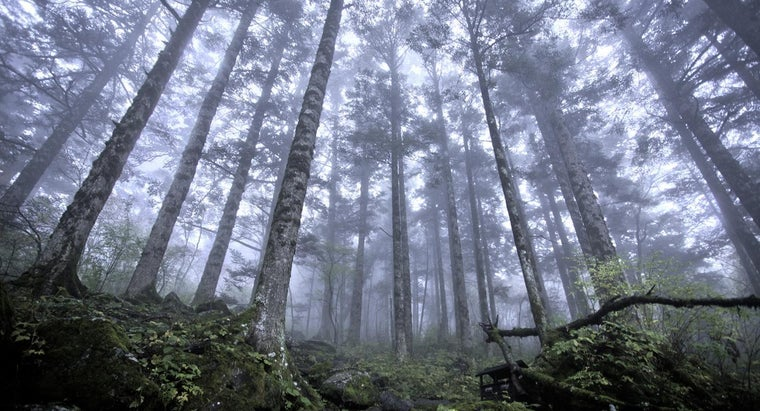 natural-vegetation