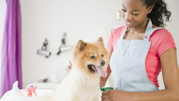Do You Need a License to Be a Dog Groomer?