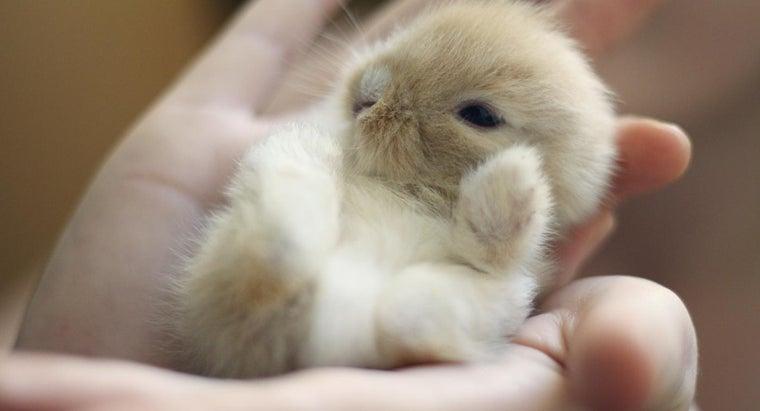 need-trained-feed-baby-rabbits
