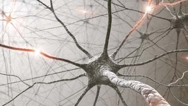 How Do Nerve Impulses Begin?