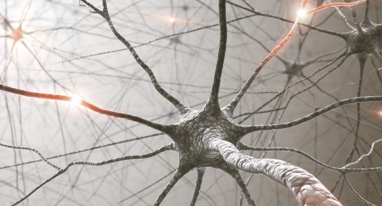 nerve-impulses-begin