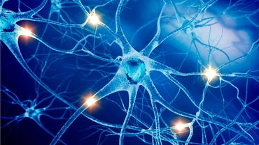 How Do You Take Care of Your Nervous System?