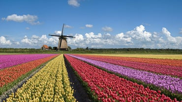 What Is the Netherlands Famous For?