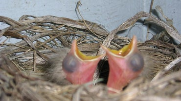 What Do Newborn Birds Eat?