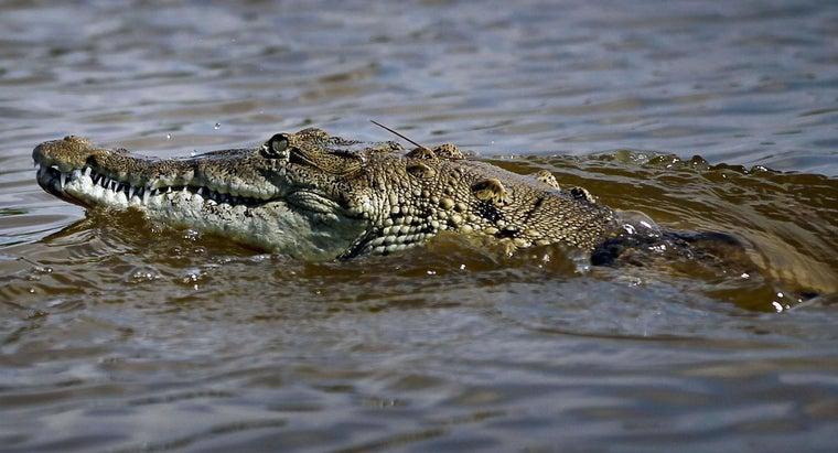 niche-crocodile