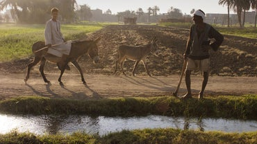 Why Was the Nile River Valley Good for Farming?