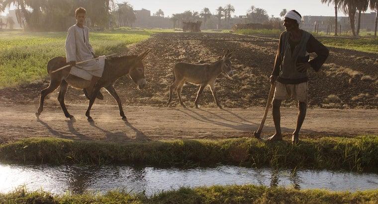 nile-river-valley-good-farming