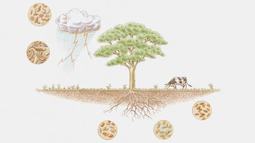 How Does the Nitrogen Cycle Work?