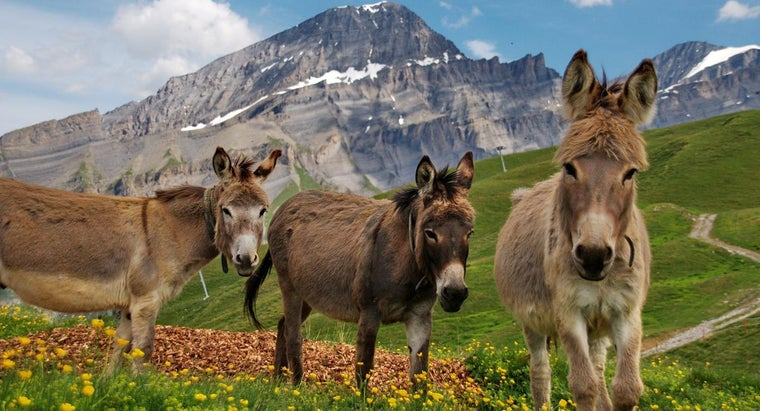 noise-donkey-make