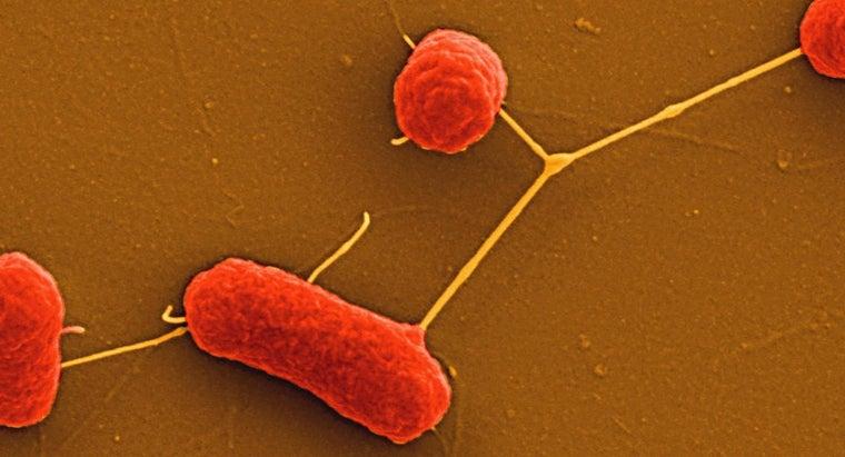 nonfastidious-bacteria