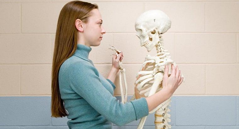 normal-bone-density-score-woman