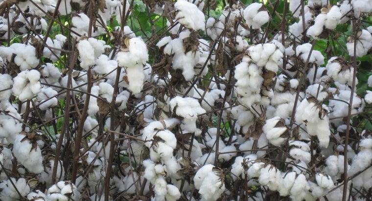 cotton-made-fabric
