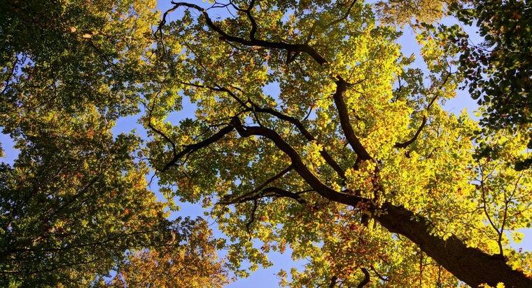 oak-come