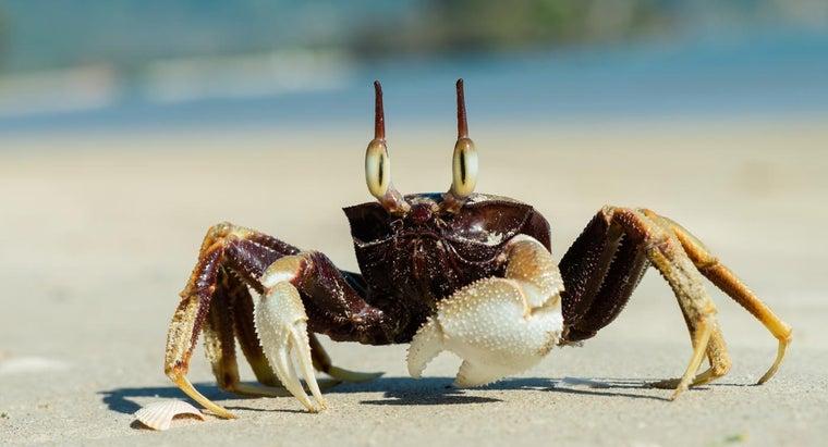 ocean-crabs-eat